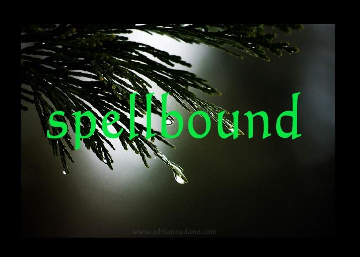 spellbound_17