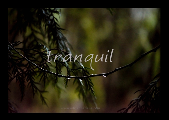 tranquil_24