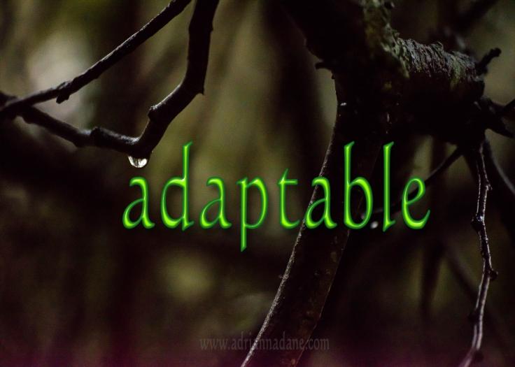 adaptable_43