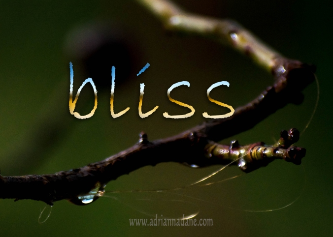 bliss_49