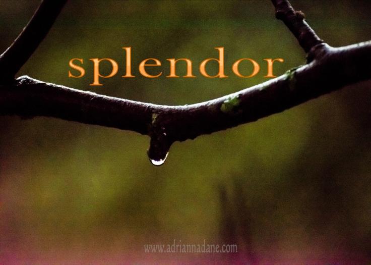 splendor_48