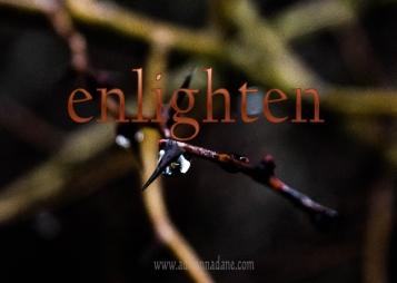 enlighten_56